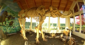 Columbian Mammoth Exhibit